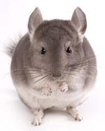 Запах от животных: как избавиться от запаха кошачьей мочи в квартире